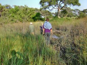 Guided bush walk in Okavango